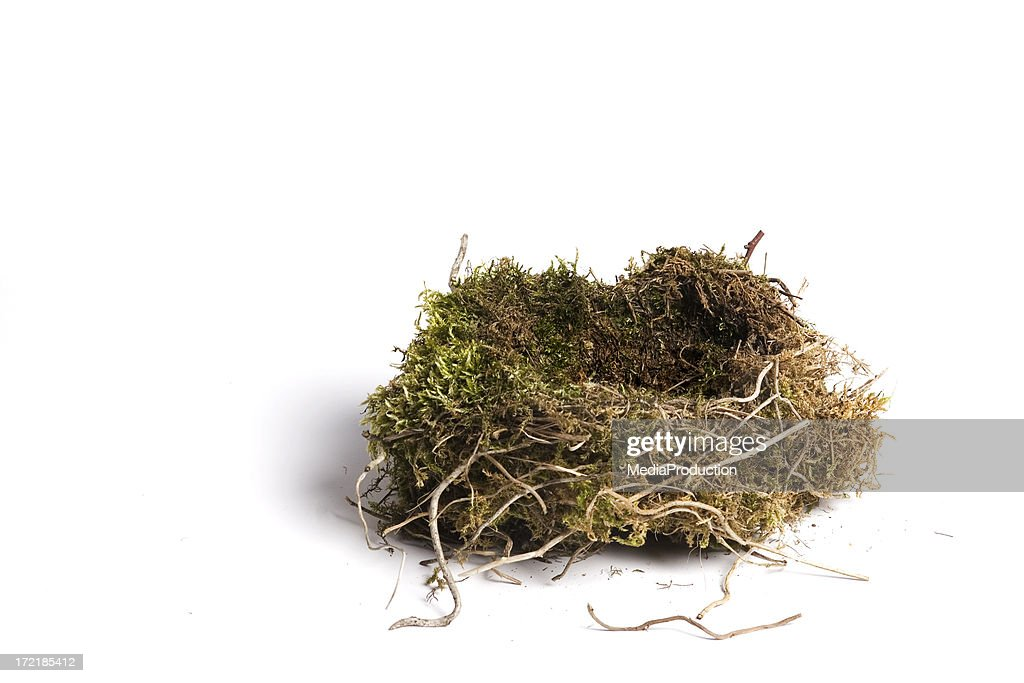 bird's nest : Stock Photo