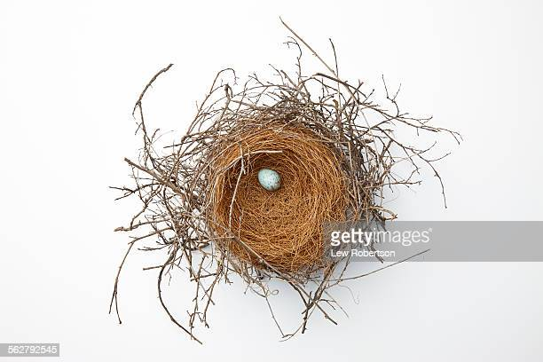 birds nest - birds nest stock photos and pictures