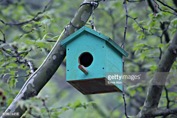 bird's nest - birdhouse stock pictures, royalty-free photos & images