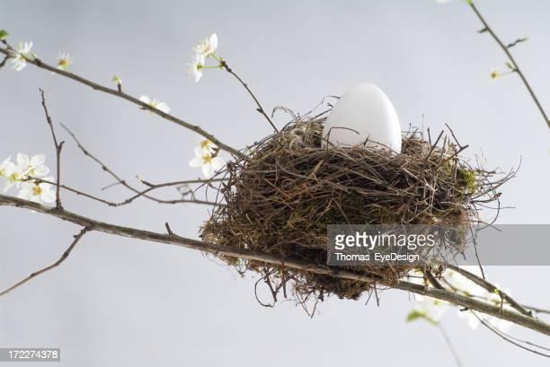 Bird's Nest Series