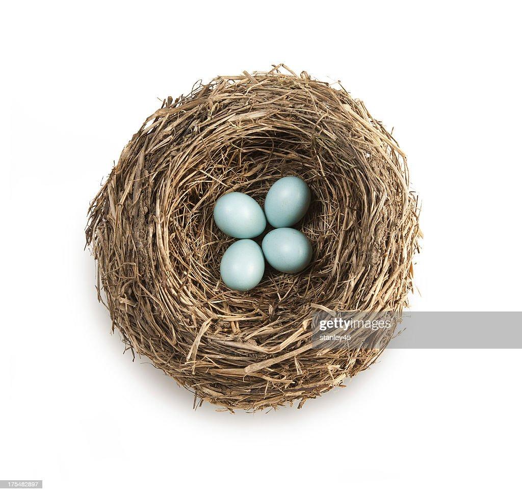 Bird's nest with four blue eggs : Stock Photo