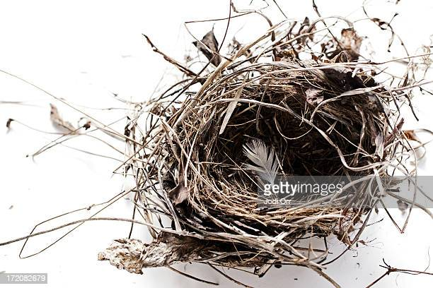bird's nest with white feather