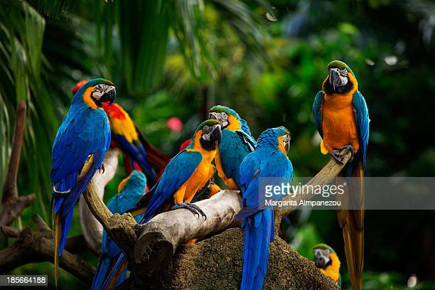 birds of paradise - jurong bird park stock pictures, royalty-free photos & images