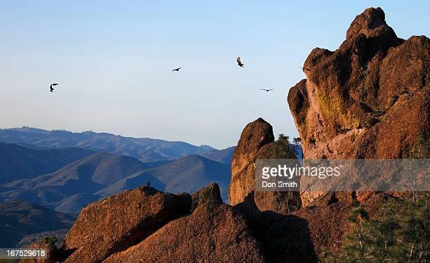 birds of prey - california condor - fotografias e filmes do acervo