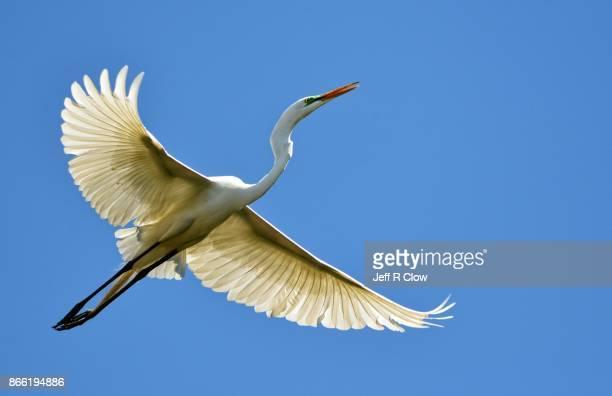 Birds of Texas 4