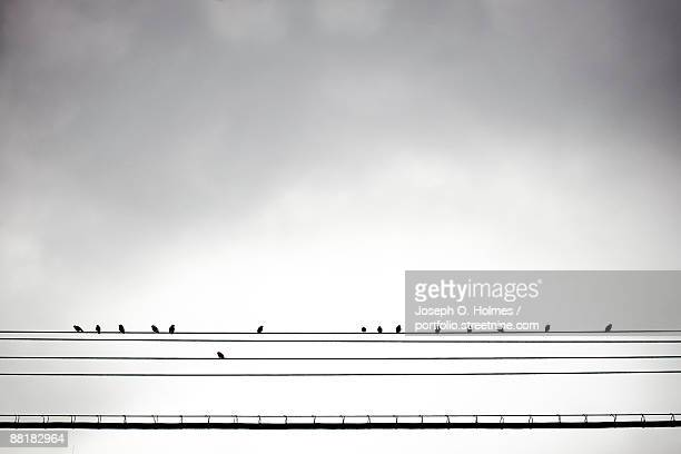 birds on a midwood wire - joseph o. holmes stock pictures, royalty-free photos & images