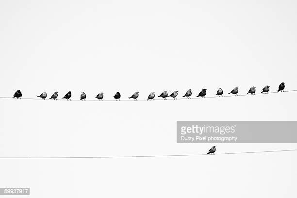 birds on a wire and one all alone - perching stock pictures, royalty-free photos & images