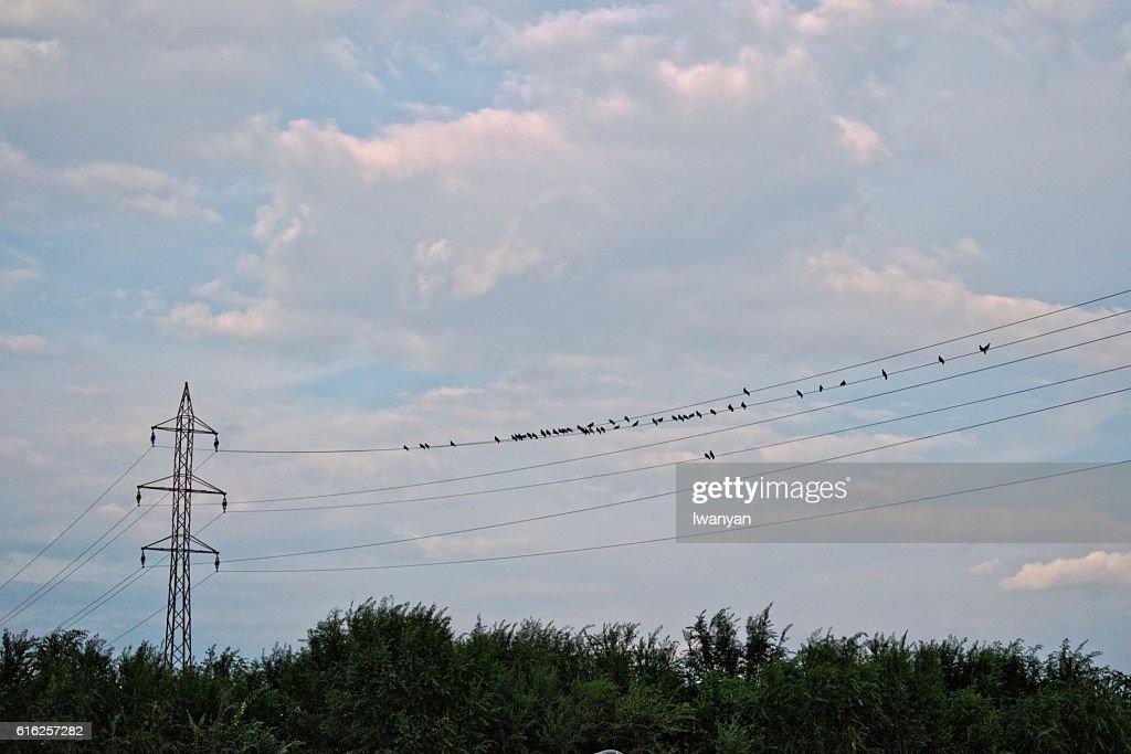 Pájaros en un cable  : Foto de stock