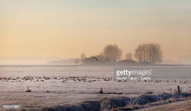 birds on field against sky during winter - paulien tabak stock-fotos und bilder