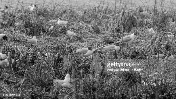 birds on land - eriksen stock pictures, royalty-free photos & images