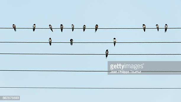 birds on parallel wires - outline stock pictures, royalty-free photos & images