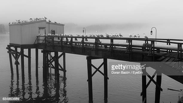 Birds On Pier Over River During Foggy Weather
