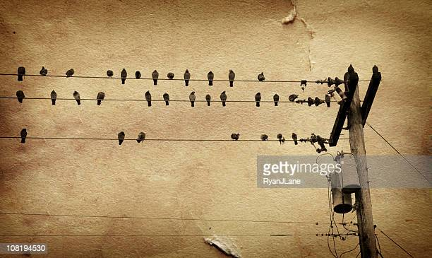 birds on telephone line overlayed with grunge brown paper - perching stock photos and pictures