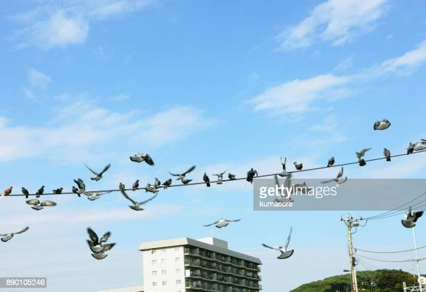 Birds on the electric wire