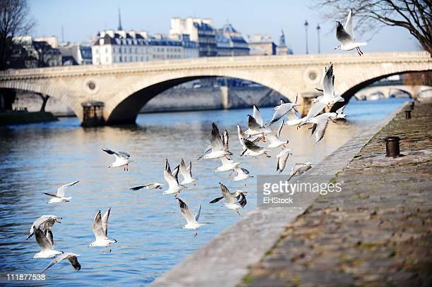 Oiseaux sur la Seine, à Paris