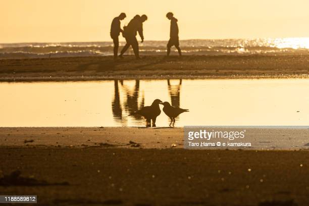 birds on the sunset beach in kamakura city of kanagawa prefecture of japan - sepia stock pictures, royalty-free photos & images