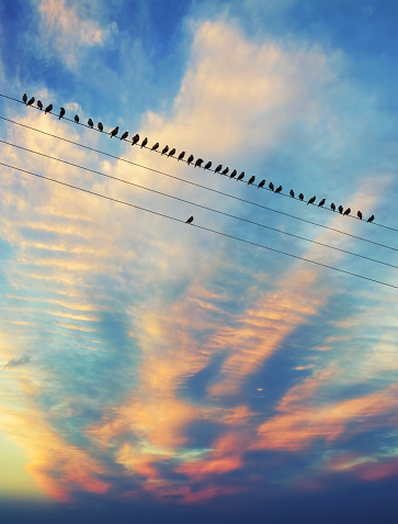 Birds on the wire - gettyimageskorea