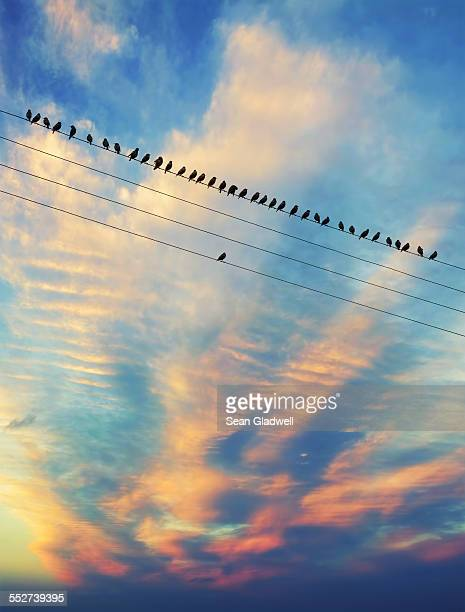 birds on the wire - individuality stock photos and pictures