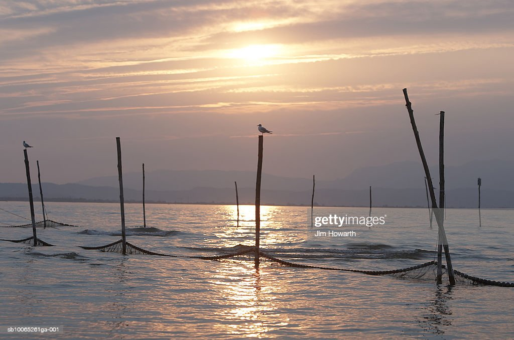 Birds on top of fishing nets,Peschiera,Lake Garda,Italy : Foto stock