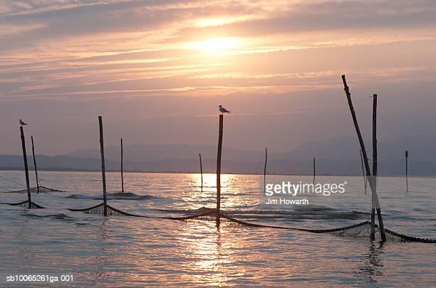 Birds on top of fishing nets,Peschiera,Lake Garda,Italy