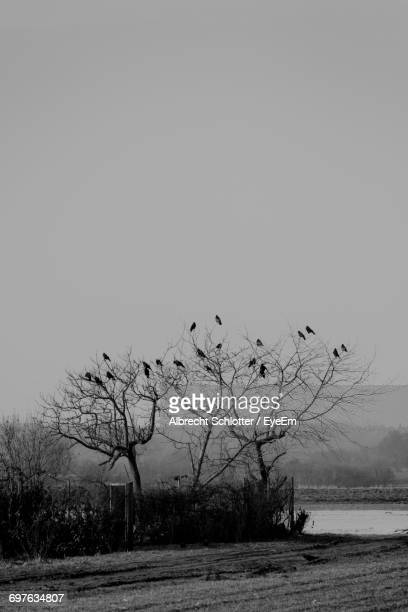 birds on trees against clear sky - albrecht schlotter stock photos and pictures