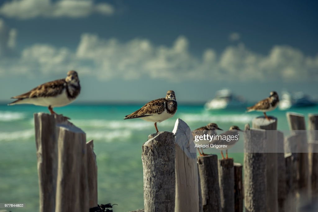 Birds on wooden posts, Isla Mujeres, Mexico : Stock Photo