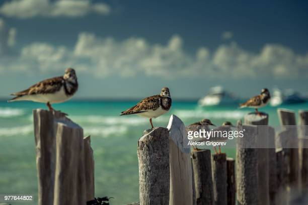 birds on wooden posts, isla mujeres, mexico - isla mujeres stock photos and pictures