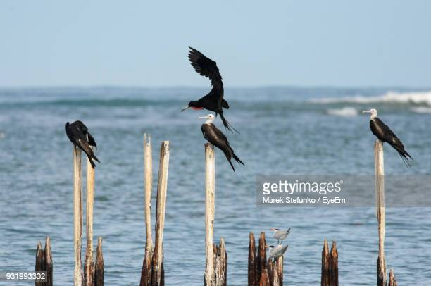birds on wooden posts over sea - marek stefunko imagens e fotografias de stock