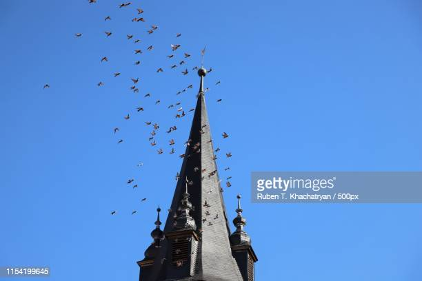 birds over temple - bell tower tower stock pictures, royalty-free photos & images