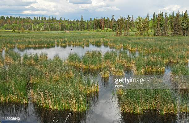 Bird's paradise in the wetlands of British Columbia,Canada