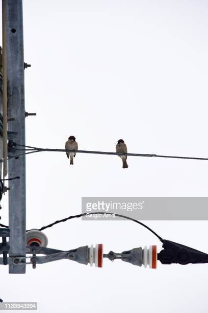 Birds perched on electric cable