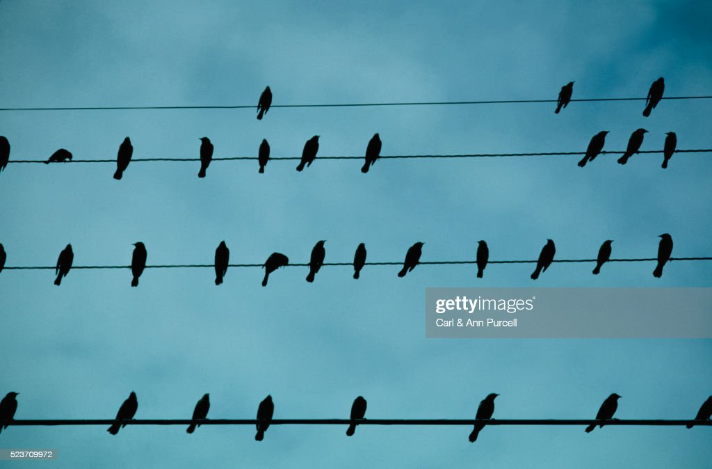 Birds Perched On Telephone Wires Stock Photo | Getty Images