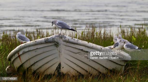 birds perching on a boat - southend on sea stock pictures, royalty-free photos & images