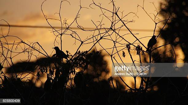 birds perching on bush - andres ruffo stock photos and pictures