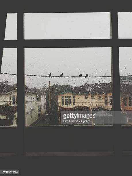 Birds Perching On Cable Seen Through Home Window