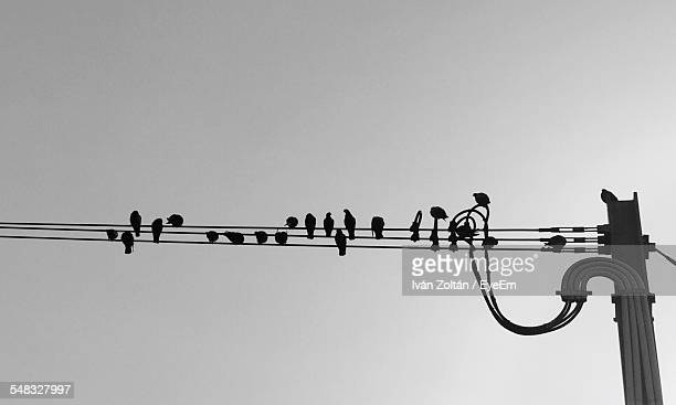 birds perching on electrical wire - iván zoltán stock pictures, royalty-free photos & images