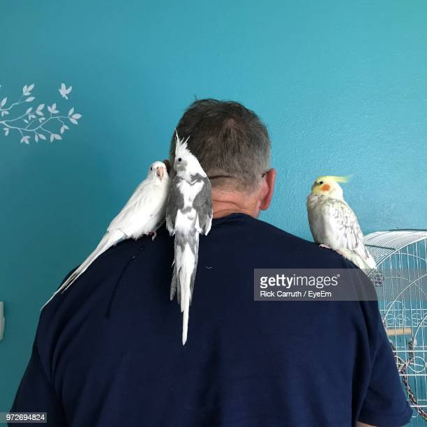Birds Perching On Man Shoulder Against Wall At Home