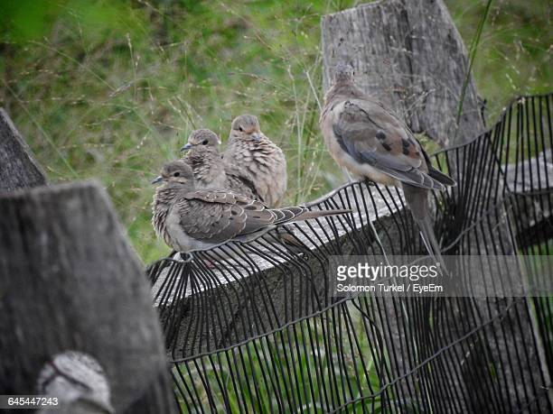 birds perching on old fence - solomon turkel stock pictures, royalty-free photos & images
