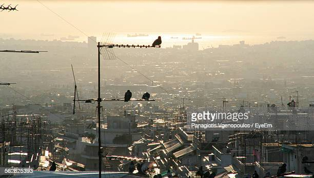birds perching on pole in front of cityscape - vgenopoulos stock pictures, royalty-free photos & images