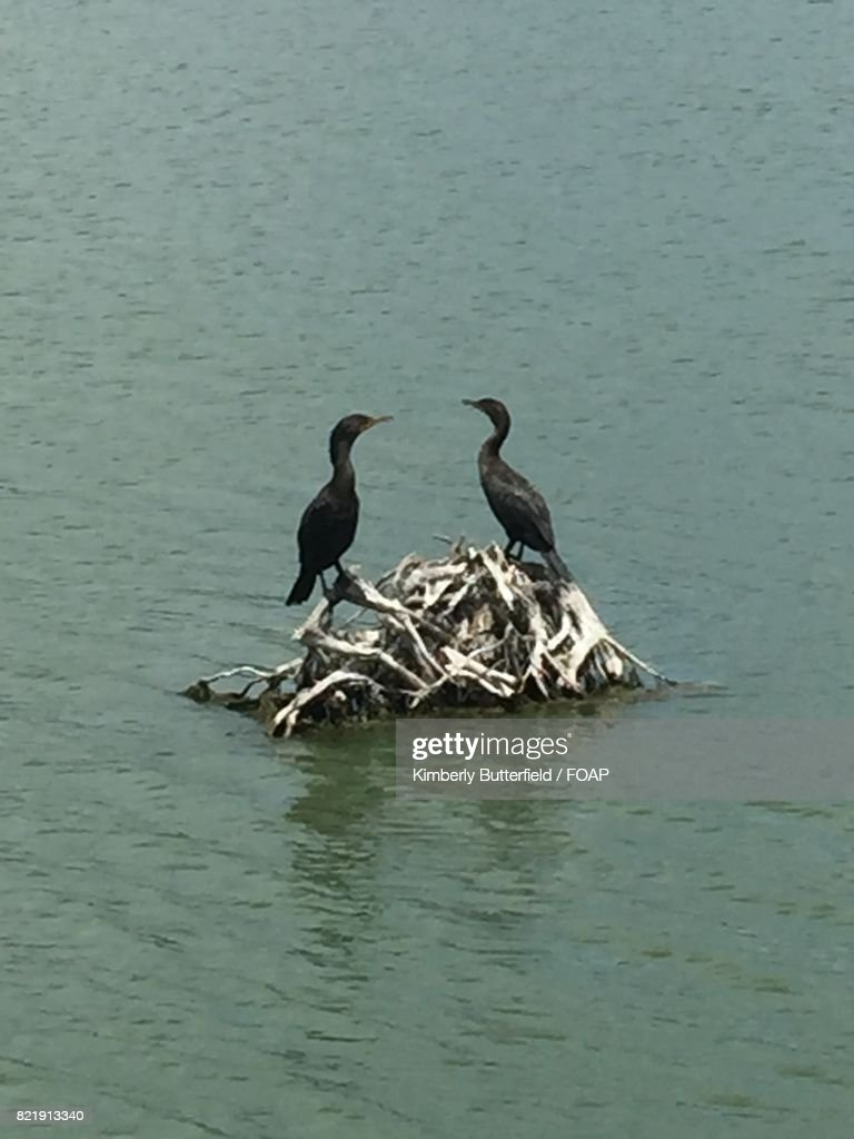 Birds perching on root in lake : Stock Photo