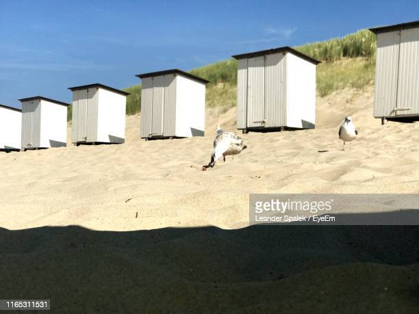 birds perching on sand at beach against blue sky - perching stock photos and pictures