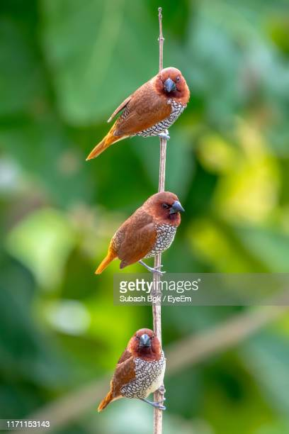 birds perching on twig - beauty in nature stock pictures, royalty-free photos & images
