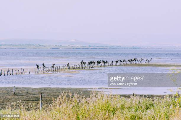 Birds Perching On Wooden Post In Sea Against Clear Sky