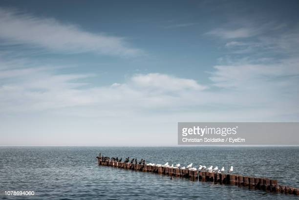 Birds Perching On Wooden Posts In Sea Against Sky
