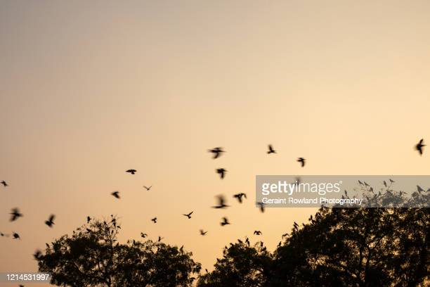 birds - celebrity death stock pictures, royalty-free photos & images