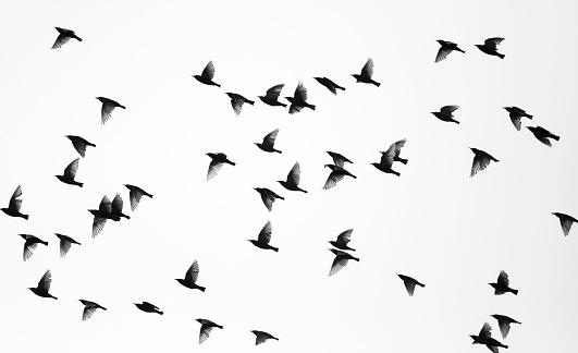 Birds 93491483