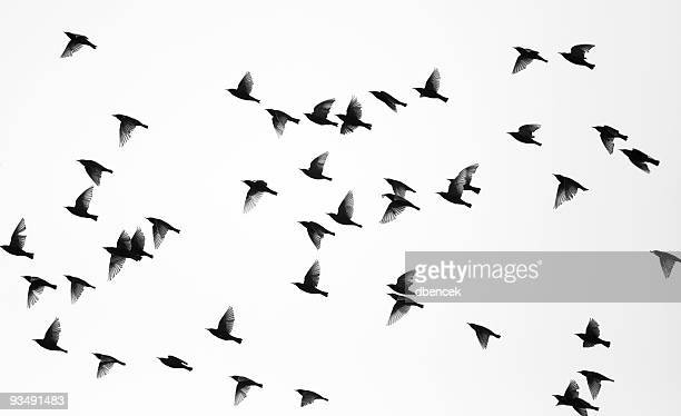 birds - bird stock photos and pictures