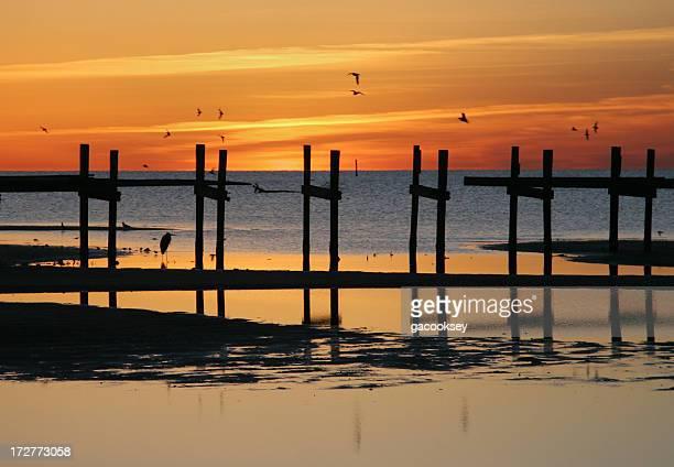 birds pier sunrise