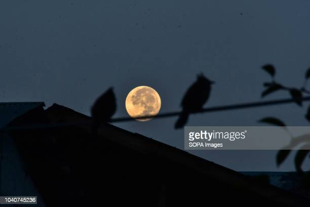 Birds rest as the harvest moon rises in Srinagar Indian administered Kashmir The Harvest Moon occurs every September and aligns with the Autumnal...