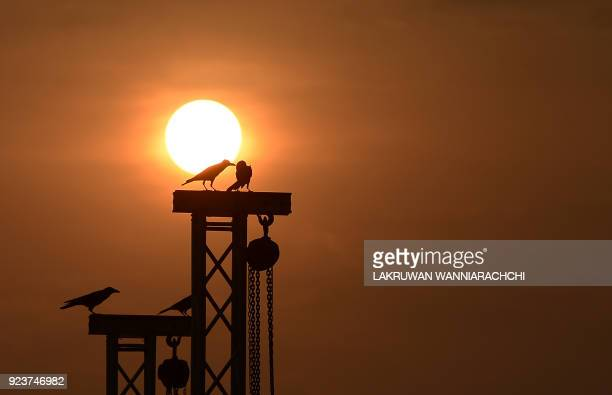 Birds rest on a pole at a beack in the Sri Lankan capital Colombo on February 24 2018 / AFP PHOTO / LAKRUWAN WANNIARACHCHI